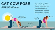 How to do Cat Cow Pose   Cow pose, Cow and Pose