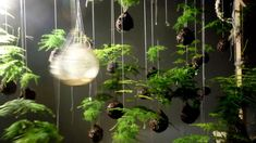 String gardens are a botanical technique meant to raise plants to eye level. Small moss balls called kokedama house the root system which is wrapped and then suspended by total awesomeness. (via designboom)