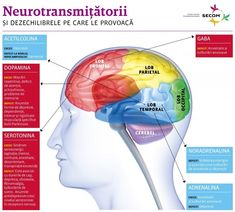 Perspective - Neurotransmitatorii si impactul lor asupra sanatatii | Secom.ro