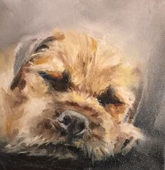 Border Terrier by Julie Brunn, oil on canvas Dog Drawings, Animal Drawings, Cute Paintings, Animal Paintings, Wag The Dog, Dog Poster, Raining Cats And Dogs, Border Terrier, Fox Art