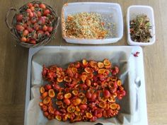 How to Dry & Store Rose Hips for Rose Hip Tea | The Homestead Survival