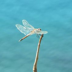 If I were a dragonfly, I'd live in Galapagos too!