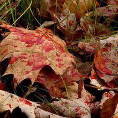 beautiful....to a hunter!!