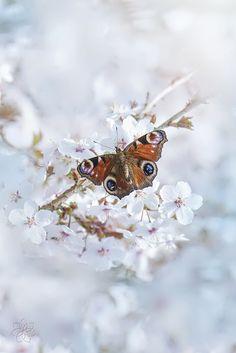 Spring Loving by Jacky Parker on 500px