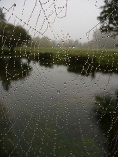 lovely photo of a dew-coveredspider's web on a misty morning in Winchester