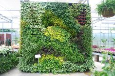 Our beautiful Green Wall in our Lothian, MD location. Green Walls are sustainable, durable and low maintenance! They add life to an office or home atmosphere.