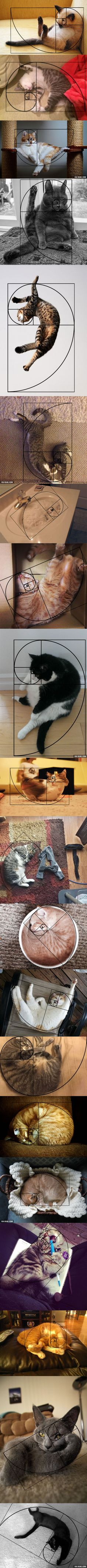There Are 20 Pictures Proved That Cats Are In Fibonacci Sequence