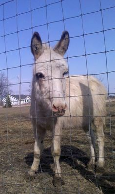 Our mini donkey, Waldo. Such a handsome dude!