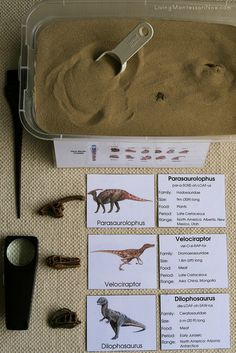 Dino Skulls Excavation Activity: match the shape of the found skull with the dinosaur cards or actual dinosaur replicas.
