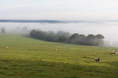 Fog in the fields.