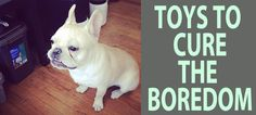 This is the always up to date list of the best french bulldog toys for your frenchie! These toys are great for chewing, wrestling, snuggling, throwing, and