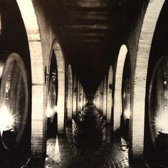 "@danidickk's photo: ""Wine tasting #chianticlassico"""