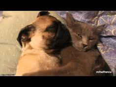 Dog Snores In Cat's Arms