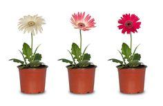 Krukväxter är inte bara snygga inredningsdetaljer, de är fantastiska nyttogörare också! Bara genom att ha någon av de här vackra plantorna hemma kan du få en renare inomhusluft och en bättre nattsömn.