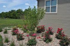New construction landscaping side yard by Norland Landscape Madison, WI