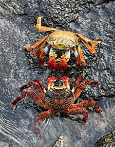 Colourful Crabs