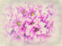 #pink #flowers #magic