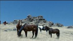 Η ιστορία αλλιώς | Η δύναμη του αλόγου Horses, Animals, Animaux, Horse, Animal, Animales, Animais