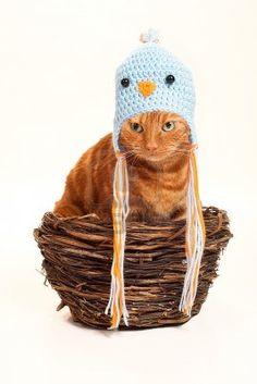 巣に座っているオレンジ色のトラ猫