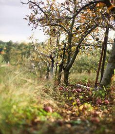 {<3} apple orchard