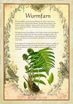 Wurmfarn - Another! Herbs Indoors, Greenhouse Gardening, Healing Herbs, Woodland Party, Aquaponics, Kraut, Botanical Illustration, Herbalism, The Cure