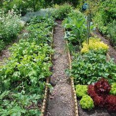 Gemüsebeet Küchengarten