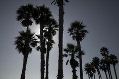 In California: expô fotográfica de Oskar Metsavaht chega a São Paulo #brazilian #California #tropical #springsummer