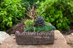 Succulent Fanatics Group on Facebook- The group started from Santa Clara County of Northern California, US. Our members are now from all over the globe. If you are crazy about succulent plants, this is the group for you. This group shares their successes and challenges in gardening with succulents. Members are encouraged to post photos as part of sharing and learning.  https://www.facebook.com/groups/Succulentfanatics/