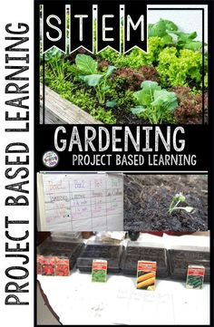 In Project Based Learning Gardening, students plan a garden and experience a scarcity of space. Students use the PACED Decision Making Guide to decide what they should plant. If you don't have a garden area you may choose to set your space as a beach towel. Students will take the seed packages and measure the amount of space each plant will take.