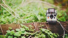 + I collect old cameras + Land camera 1000 w/ polatronic 1 {b}