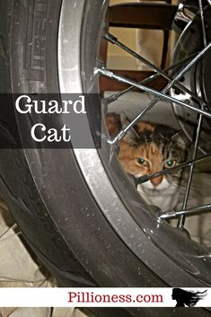 Biker cats are so very useful. Put them on motorcycle security detail and they'll never let you down. They're just part of the furry motorcycle aesthetic at my place! Motorcycle Garage, Scrambler Motorcycle, Cat Love, Used Cars, Cars For Sale, 3d Printing, Biker, Racing, Cats