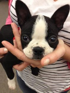 Dang cute.  http://dogblog.dogster.com/2012/03/02/the-new-office-puppy-is-cute-enough-to-eat-but-we-cant-do-that-so/