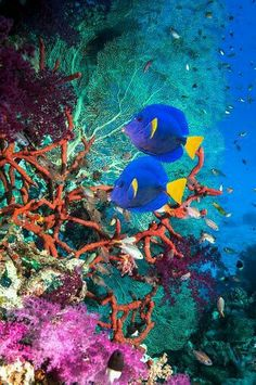 Ocean creatures Beautiful Coral Reef..  http://what-do-animals-eat.com/coral/