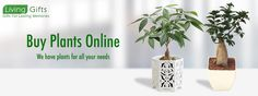 Buy plants in delhi,Plant nurseries in delhi,Gift a plant online in delhi,Buy plants online in delhi,Send plants online in delhi Flowering Plants In India, Bonsai Plants For Sale, Bonsai Plants Online, Order Plants Online, Gifts For Your Boss, Boss Gifts, Toys Online, Online Gifts, Best Online Flowers