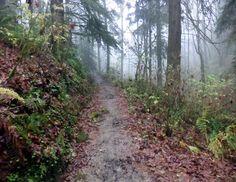 Hardesty Trail Forest Park