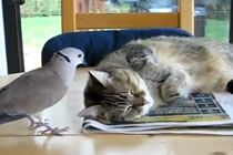 Cat is pretty tolerant of this annoying bird.  I was sure this was going to end bad for the bird.