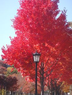 Scarlet fall foliage. A perfect color palette for the season.