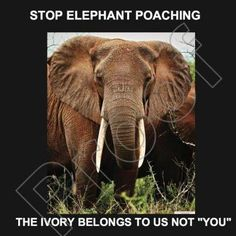 TAKE ACTION FOR WILDLIFE! By signing this online petition to Say No to the ivory trade, you will help to show politicians attending the meeting of CITES in March 2013 how adamant we all are that they should vote against any movement to legalise the sales of ivory in any form.     http://www.iworry.org/
