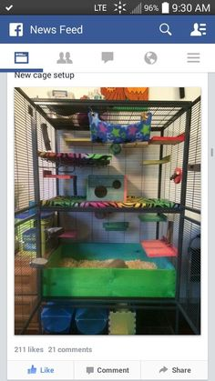 I like this except for the wood box on the bottom to hold bedding. It would smell bad quickly. I ordered a stainless steel one that fits perfectly, doesn't hold in smell, and is super easy to clean. Pet Rat Cages, Hamster Cages, Critter Nation Cage, Chinchilla Care, Rat Care, Rat House, Dumbo Rat, Fancy Rat, Small Animal Cage
