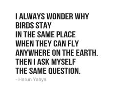 i-always-wonder-why-birds-stay-in-the-same-place-when-they-can-fly-anywhere-on-the-earth-then-i-ask-myself-the-same-question.jpg (550×448)