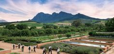 Franschhoek Food and Wine Tour Cape Town - Explore Sideways South Africa Honeymoon, Safari, Stuff To Do, Things To Do, Wine Tourism, Le Cap, Wanderlust Travel, Cape Town, Around The Worlds