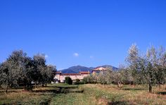 Olive Oil in Lucca, Italy - The old farmhouse and barn of Colle di Bordocheo, dating from 1800, - The New York Times