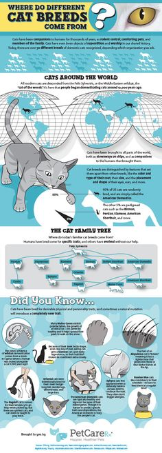 Discover new TIPS! Discover new TIPS! Published by: PetCareRx Original source: here TIPS FOR: cats, education, education and communications, pets, pets and animals, science