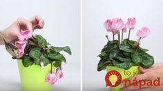 Nedarí vašim izbovým rastlinkám? Dajte im tento zázračný životabudič, po ktorom budú opäť krásne!