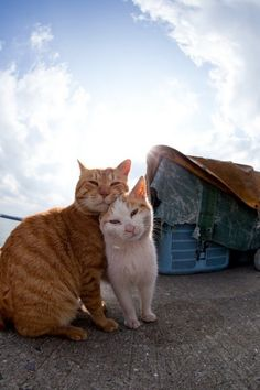 """pansy-boy: boyqueen: dorothy-cotton: niuniente: Tashiro-jima (or Tashirojima), 田代島, is a small island in Japan. It has become known as """"Cat Island"""" due to the large stray cat population that thrives as a result of the local belief that feeding cats will bring wealth and good fortune. The cat population is now larger than the human population on the island. There is a small cat shrine Neko-jinja (猫神社?) in the middle of the island, roughly situated between the two villages. In the past, the…"""