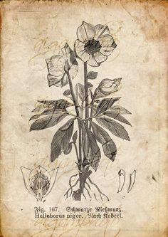 Vintage Botanical floral plants Old paper drawing set of