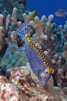 Stunningly beautiful! | under the sea | | oceanlife | | amazing nature | #oceanlife #amazingnature https://biopop.com/