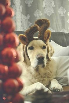 Can you spot the reindeer?