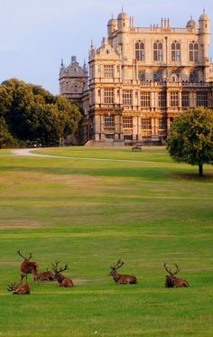 ~Wollaton Park, Nottingham, England (by Gerry Molumby)~ Hella lordy pointy headed creature deer things excuse yourself Faolan