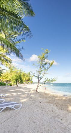 Palm trees, beach and blue skies in Mauritius. Hotel Riu Creole. All Inclusive holidays in Mauritius.
